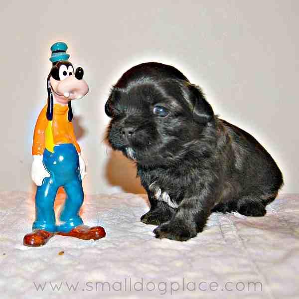Disney Dog Names for Boys