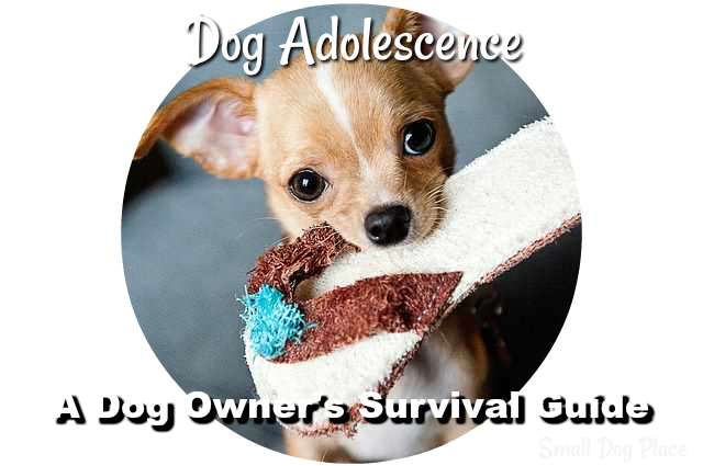 Dog Adolescence:  A Dog Owner's Survival Guide