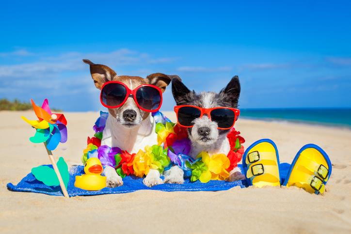 Taking Your Dog to the Beach:  9 Tips All Dog Owners Should Know