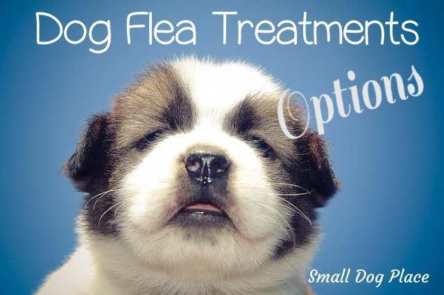 Dog Flea Treatment Header Image