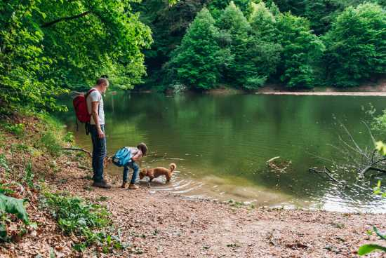Prepare your dog for hiking or camping
