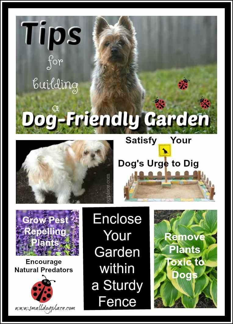Tips for building a Dog Friendly Garden