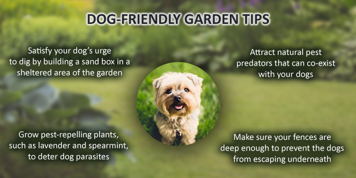 Dog-Friendly Gardening Tips  Header Image