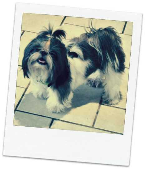 Take a recent photograph of your dog before your trip as one more proof of identification.