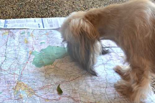 Going on a dog friendly road trip does require some advanced planning.