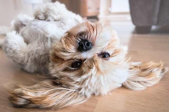 Indoor Dog Games:  Teach Him a Treat