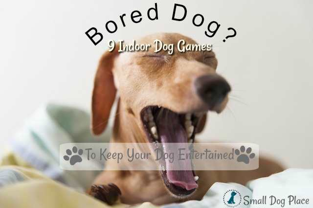 9 Indoor activities to keep your dog entertained during the wintertime.