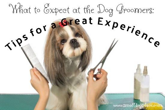 What to Expect at the Dog Groomers:  Tips for a Wonderful Experience.