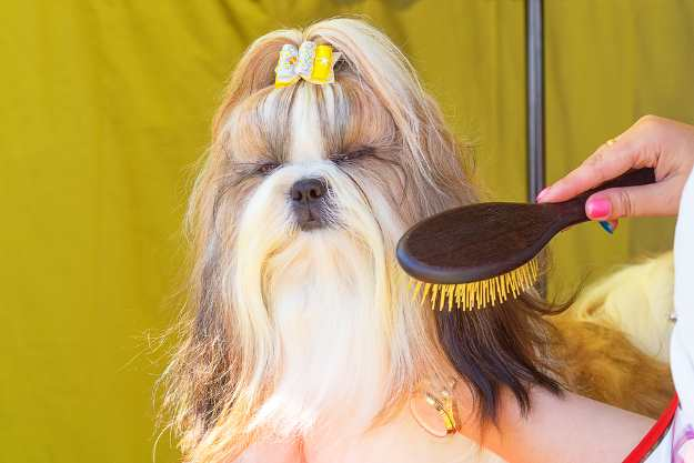 When dog grooming with hair clippers, don't neglect combing and brushing.