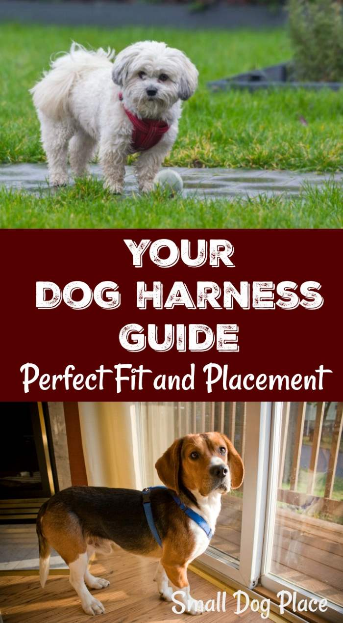 Your Dog Harness Guide