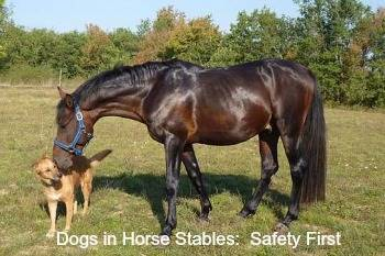 Keeping Your Dog safe in Horse Stables