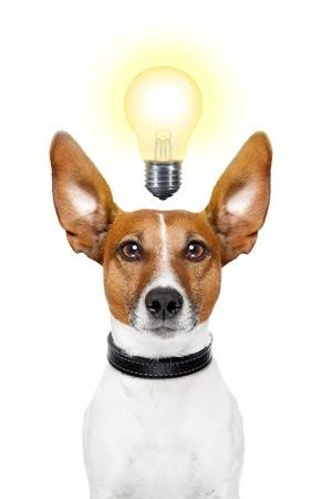 Dog Humor: How Many Dogs Does it Take to Change a Light Bulb?