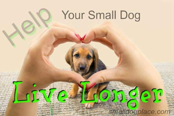 Help Your Small Dog Live Longer