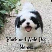 Dog Names for a Black and White Dog Name