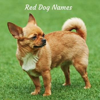 Dog Names by Color:  Red dog names