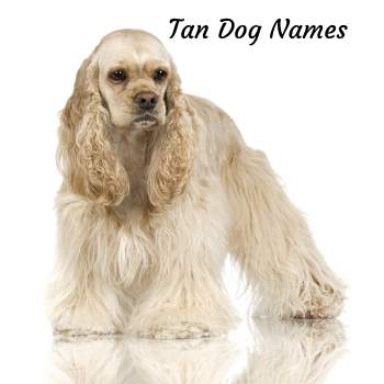 Dog Names for a Tan Colored Dog