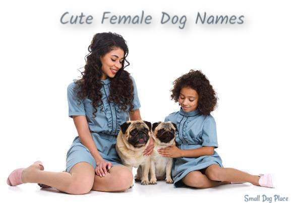 Dog Names Female;  Two pugs and two girls