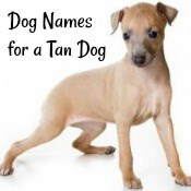 Dog Names for a Tan Dog