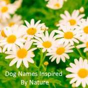 Dog Names Inspired by Nature