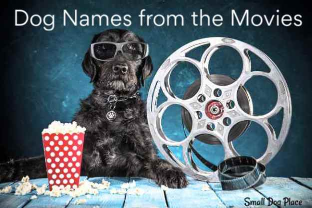 Dog Names from Movies: Choose a Name Based on a Celebrity Dog