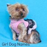 Girl Dog Names listed in alphabetical order.