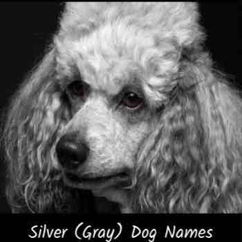 Gray or Blue Dog Names