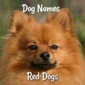 Dog Names for a Red Dog
