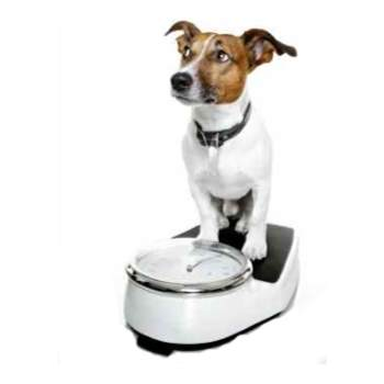 Learn about overweight dogs and what you can do to help.