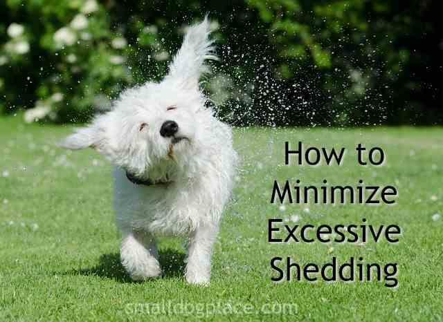 Excessive Dog Shedding