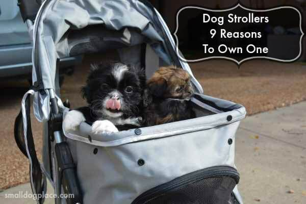 Dog Stroller:  9 Reasons to Own One