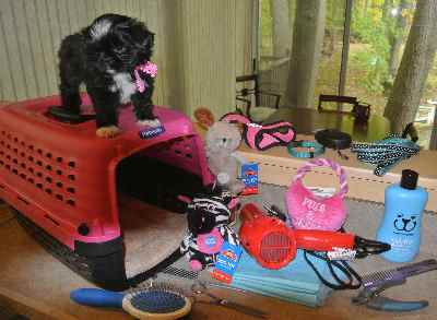 Puppy Supplies including crate, puppy pads, grooming supplies, toys, harness and leash.
