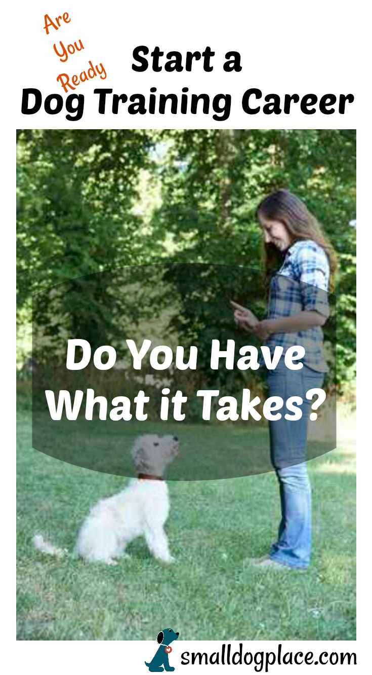 Dog Training Career:  Tips to Help you Get Started