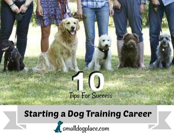Top 10 Tips to a Successful Dog Training Career