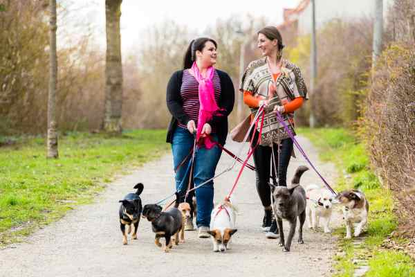 Prepare your dog for his first visit with the dog walker well in advance.