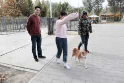 Is Your Doggie Daycare Safe for Your Dog? Link to the article.