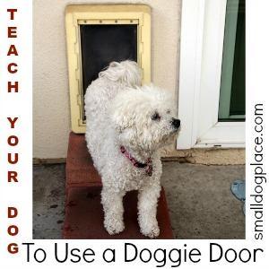 Teach Your Dog to Use a Doggie Door