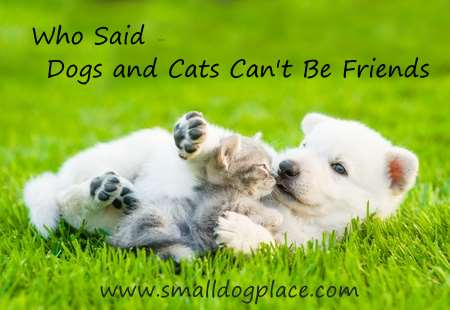 Dogs and cats living together can be friends