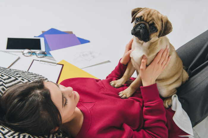 10 Small Dogs For Busy Students Keep Your Stress At Bay