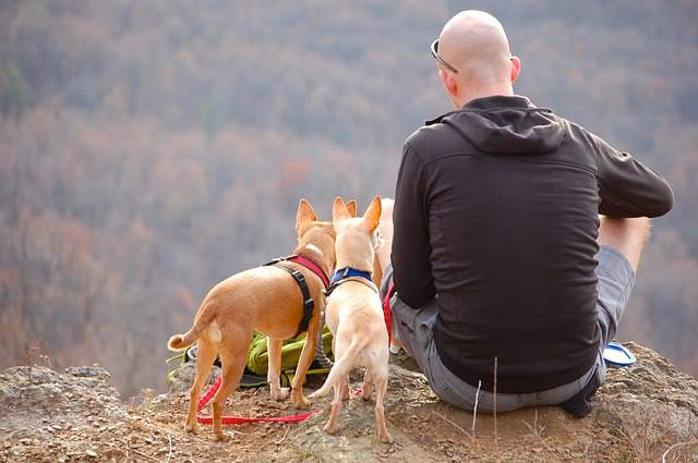 When taking a small dog up a mountain, plan to take plenty of breaks