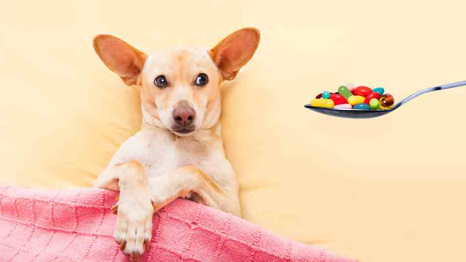 Specific supplements for seniors often augment the best food for your elderly dog.