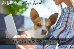 Small Dog Lifestyle:  Emotional Support Animals with link to the article