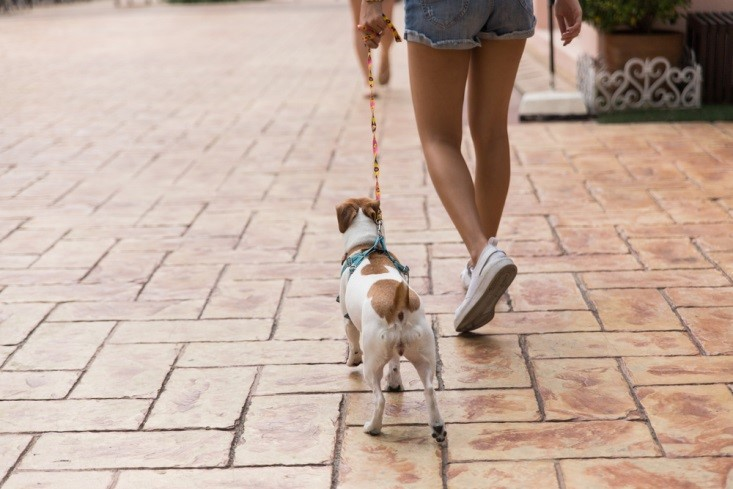 Energetic Small Dogs Often Benefit from a Leisurely Walk.