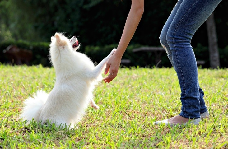 Obedience Cues work well for energetic small dogs