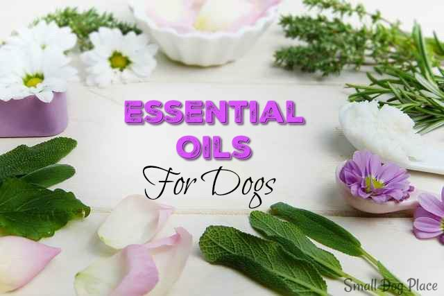8 Essential Oils for Dogs