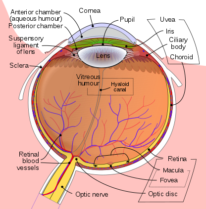 Anatomy of an Eye