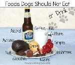 Foods that Dogs should not eat.