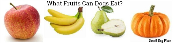 What fruits can my dog eat?
