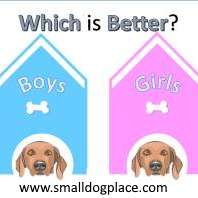 Boy or Girl Dogs, what is best