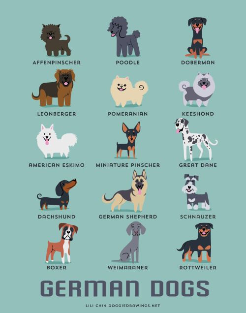 Best German Dog Names