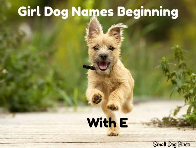 Girl Dog Names Beginning with E